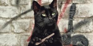 8 secrets de beauté à piquer aux chats