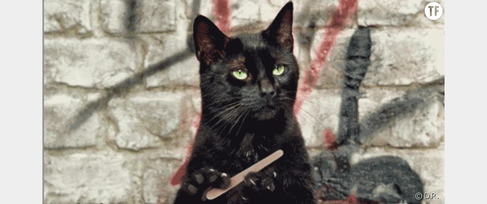 Les chats, ces maniaques de l'hygiène...