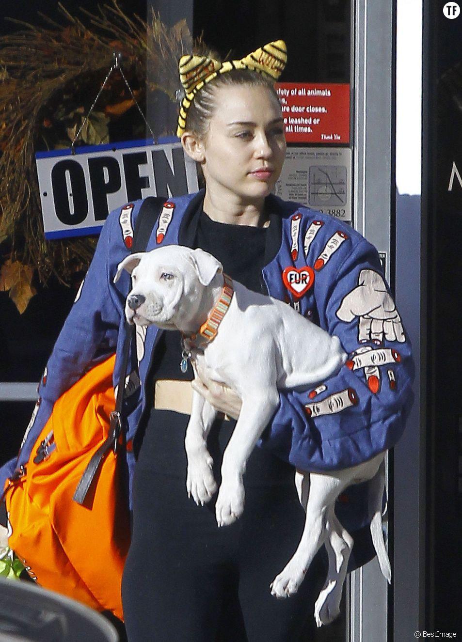 Miley Cyrus à la sortie d'un cabinet vétérinaire avec son chien à Studio City, le 10 novembre 2015