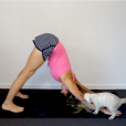 Faire du yoga avec son chat, la nouvelle tendance zen