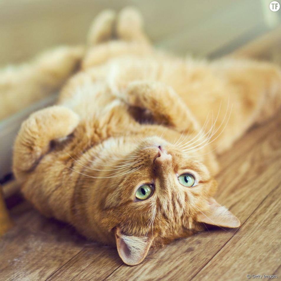 6 comportements des chiens et des chats enfin expliqués