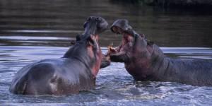 5 animaux qui ont une vie sexuelle beaucoup plus misérable que la vôtre