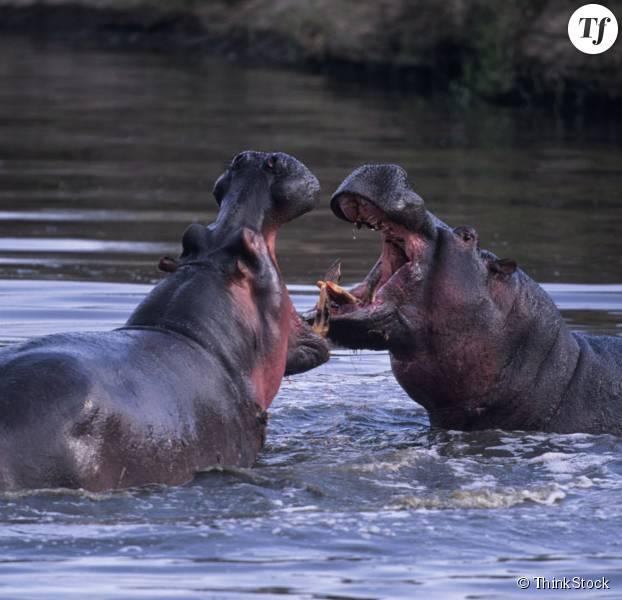 Cinq animaux qui ont une vie sexuelle vraiment minable