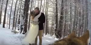 La chienne de ces amoureux a filmé leur anniversaire de mariage (et le résultat est très réussi)
