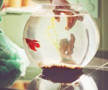 Adoptez un poisson, c'est bon pour la santé