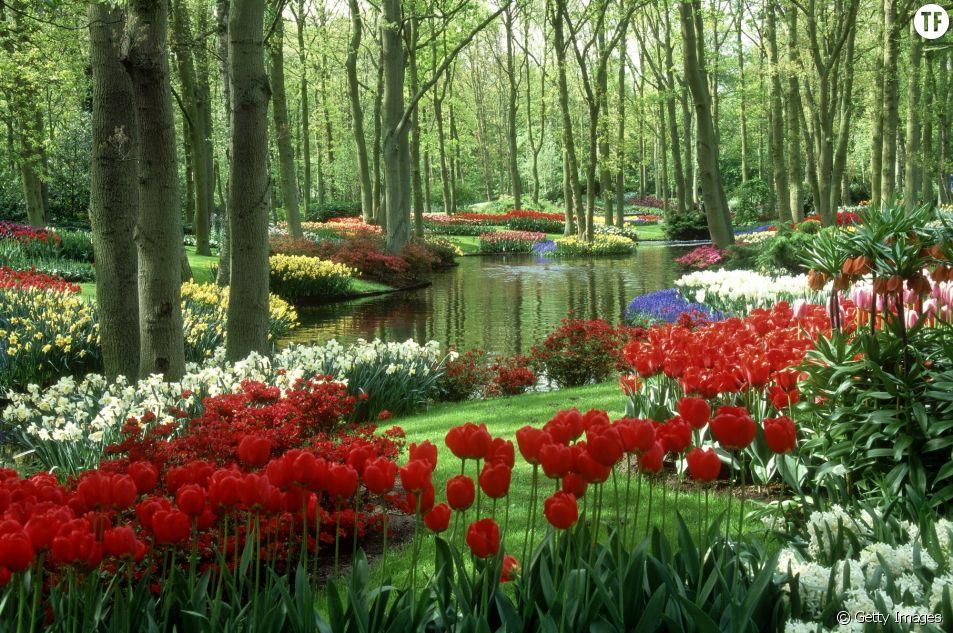 Parmi les 15 plus beaux jardins du monde, il y a celui de Keukenhof aux Pays-Bas.