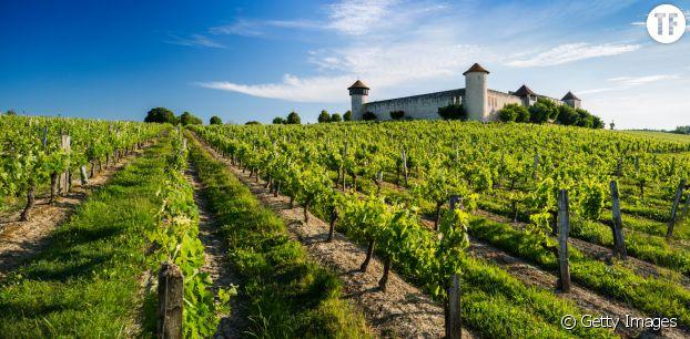 Bordeaux, vignoble