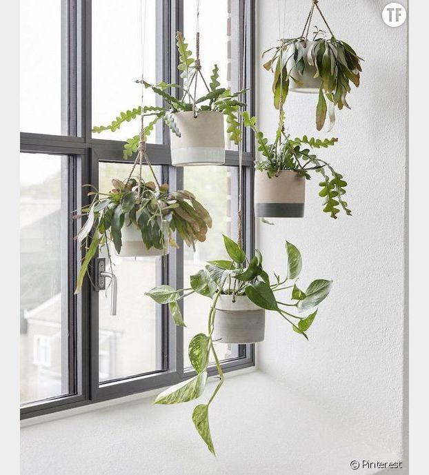 Tendances 2017 : les plantes suspendues