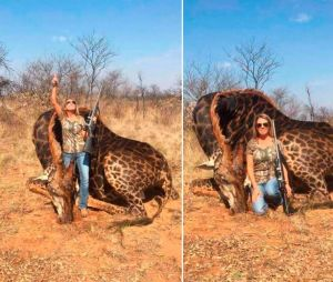 Une américaine tue une girafe et s'attire les foudre d'internautes