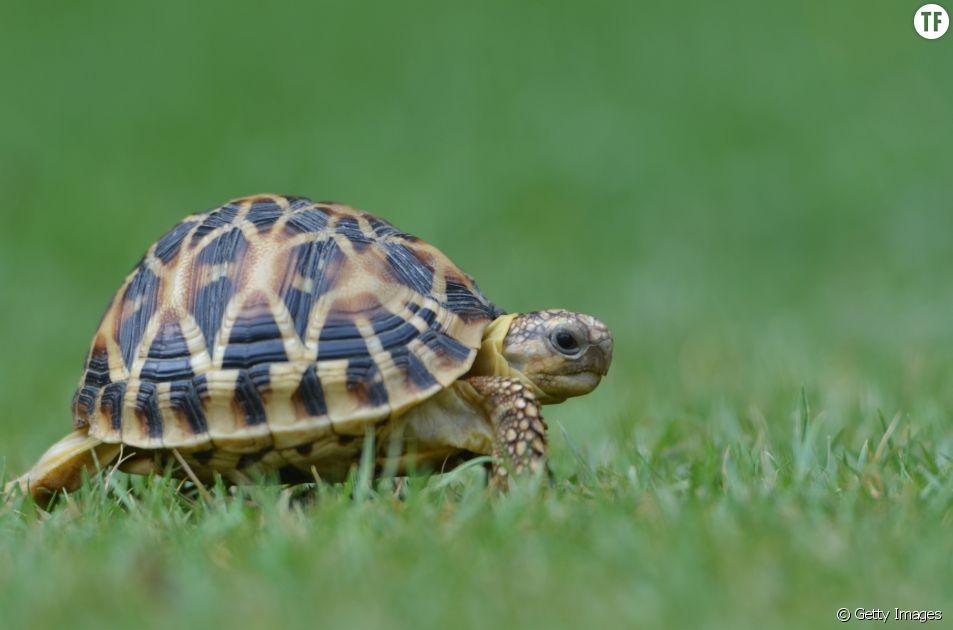 Vos vieux soutifs peuvent sauver des tortues