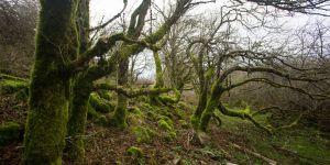 """Les habitants de ce village écossais souhaitent retrouver leur """"sorcière"""""""