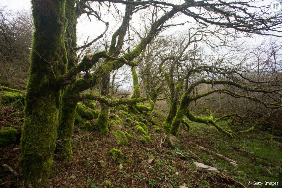"""Un village écossais se mobilise pour rendre sa dignité à une """"sorcière"""""""