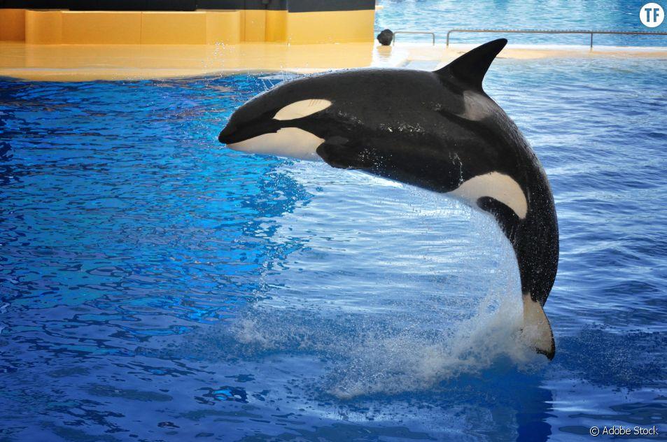 Bientôt la fin des delphinariums en France