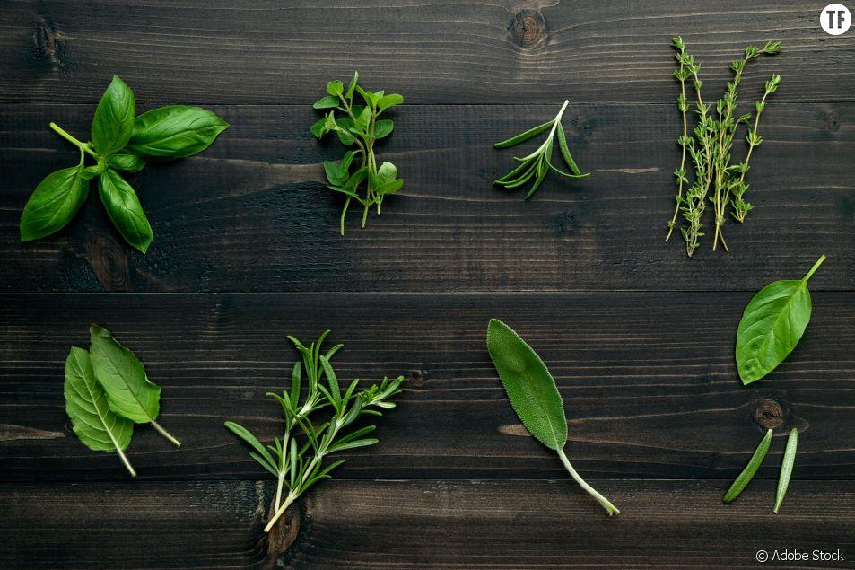 5 plantes pour booster mon système immunitaire naturellement