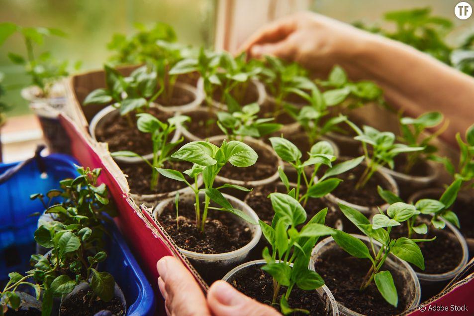 Quels légumes je peux faire pousser dans mon appart sans balcon (et comment)
