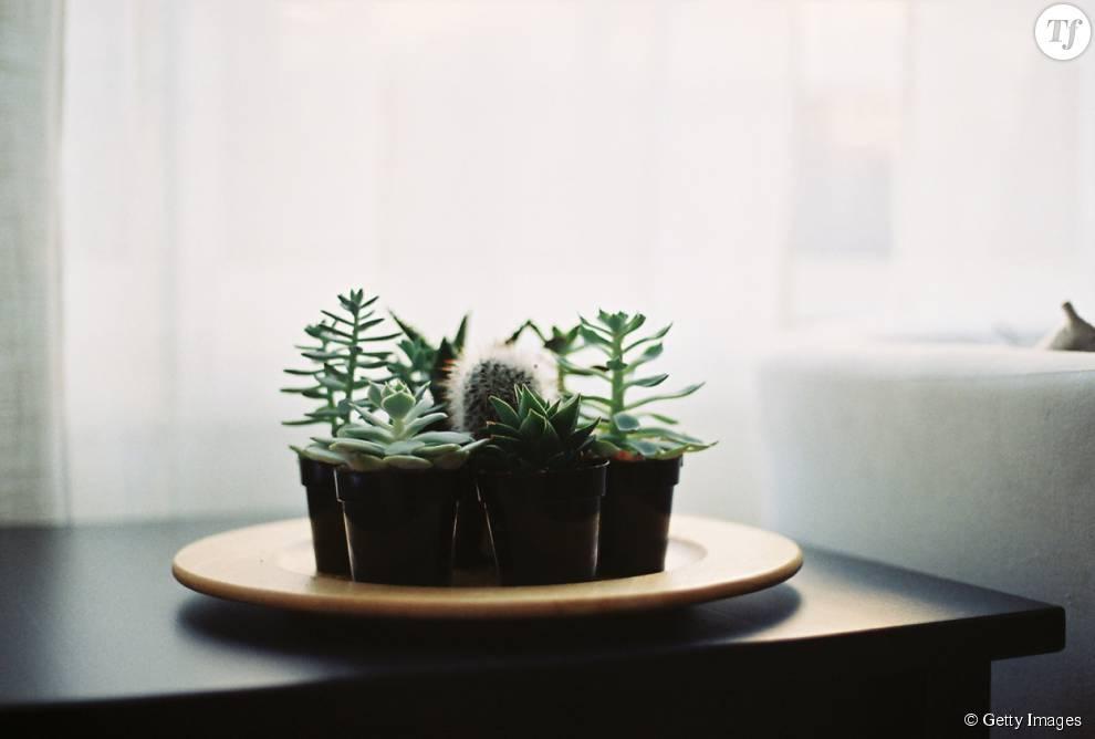 Les succulentes, les plantes à la mode