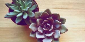 4 (très) bonnes raisons de pimper son intérieur avec des succulentes