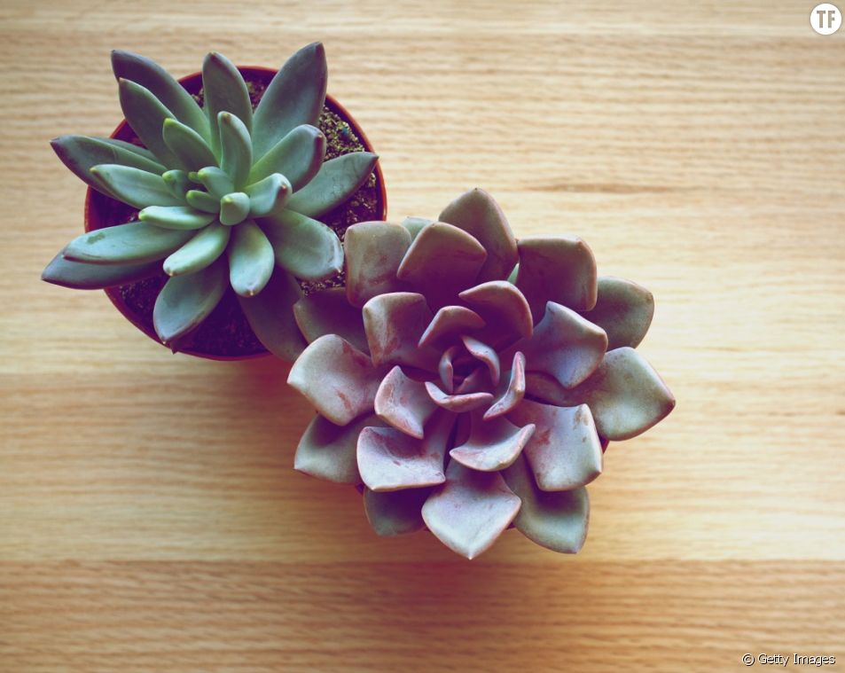 Les succulentes (ou plantes grasses) : pourquoi elles font de géniaux éléments de décoration