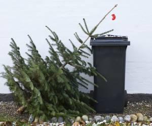6 façons écolos de se débarrasser de son sapin de Noël