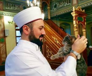 Un imam d'Istanbul ouvre sa mosquée aux chats errants