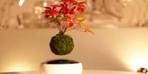 Il existe maintenant des bonsaïs qui flottent dans l'air