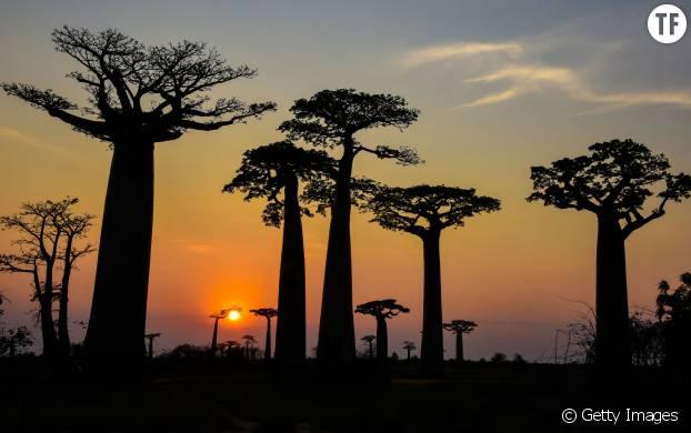 Pays des Baobabs