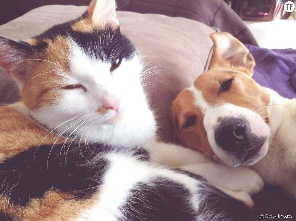 Quel est vraiment le meilleur animal de compagnie ?