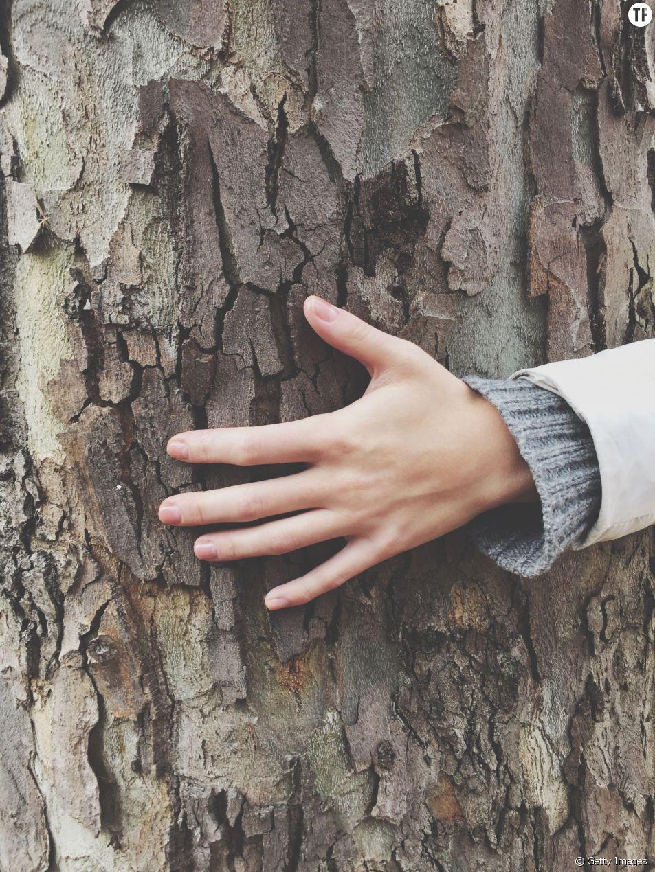 Le bois est votre ami