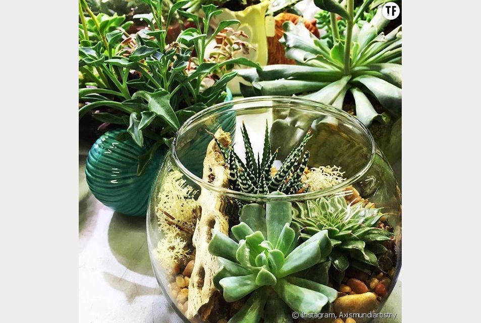 Le terrarium est la touche green qui manquait à votre intérieur !