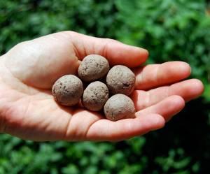 Guerrilla Gardening: comment faire des bombes de graines pour fleurir la ville