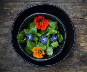 5 fleurs comestibles délicieuses à préparer en salade