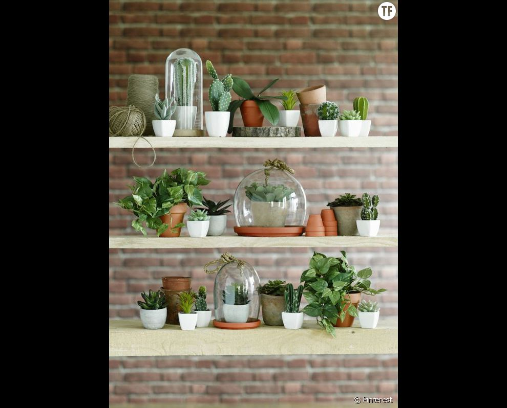 Idée de déco n°3 : mélanger les cactus