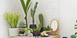 25 jolies idées de déco avec des cactus repérées sur Pinterest