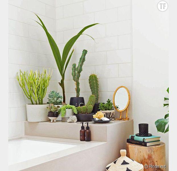 Idée déco n°4 : des cactus dans la salle de bain