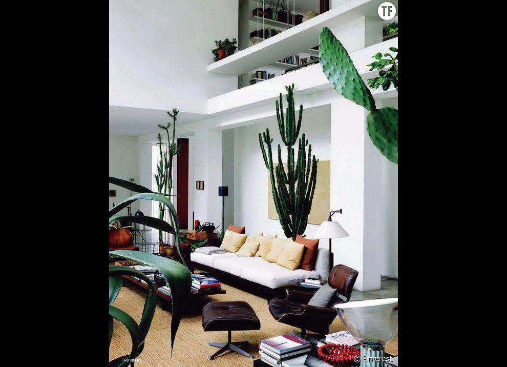 Id e de d co n 5 des cactus g ants dans le salon for Idee de job