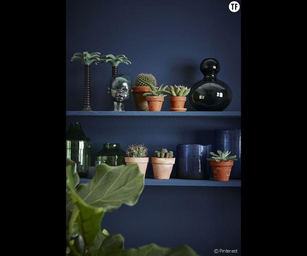 Idée déco n°8 : des cactus contre un mur indigo