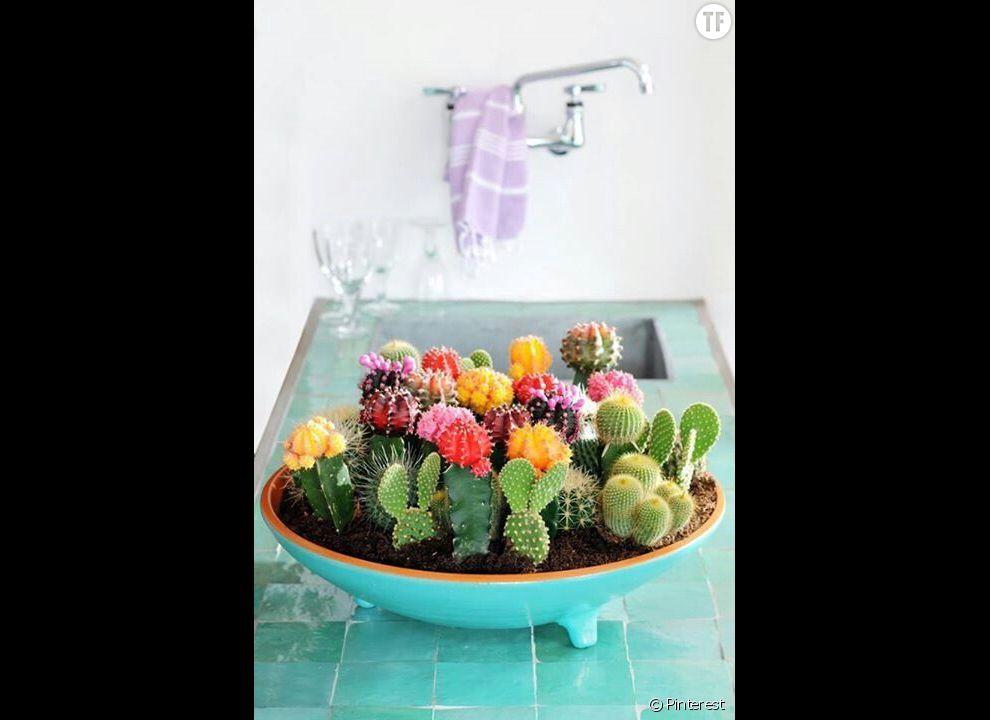 Idée déco n°9 : des cactus dans la cuisine