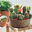 Idée déco n°11 : des cactus dans un panier