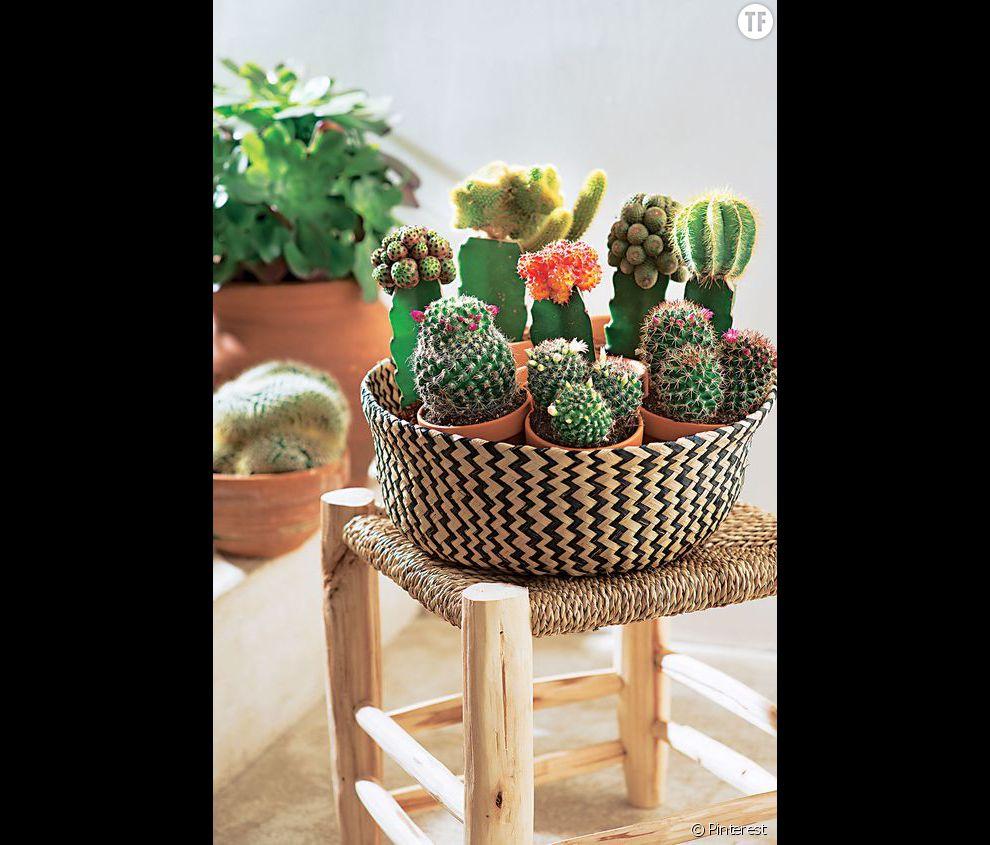 id e d co n 11 des cactus dans un panier terrafemina. Black Bedroom Furniture Sets. Home Design Ideas
