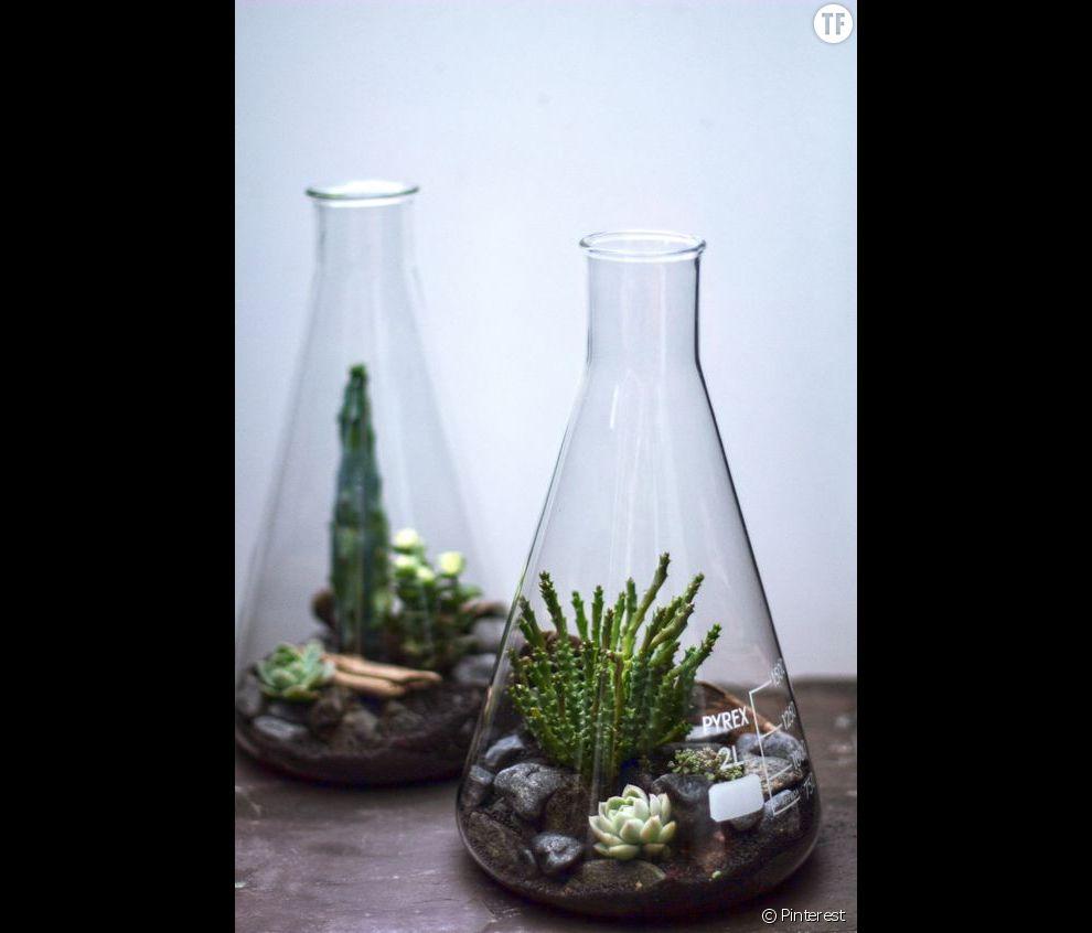 Idée déco n°14 : des cactus dans des terrarriums fioles