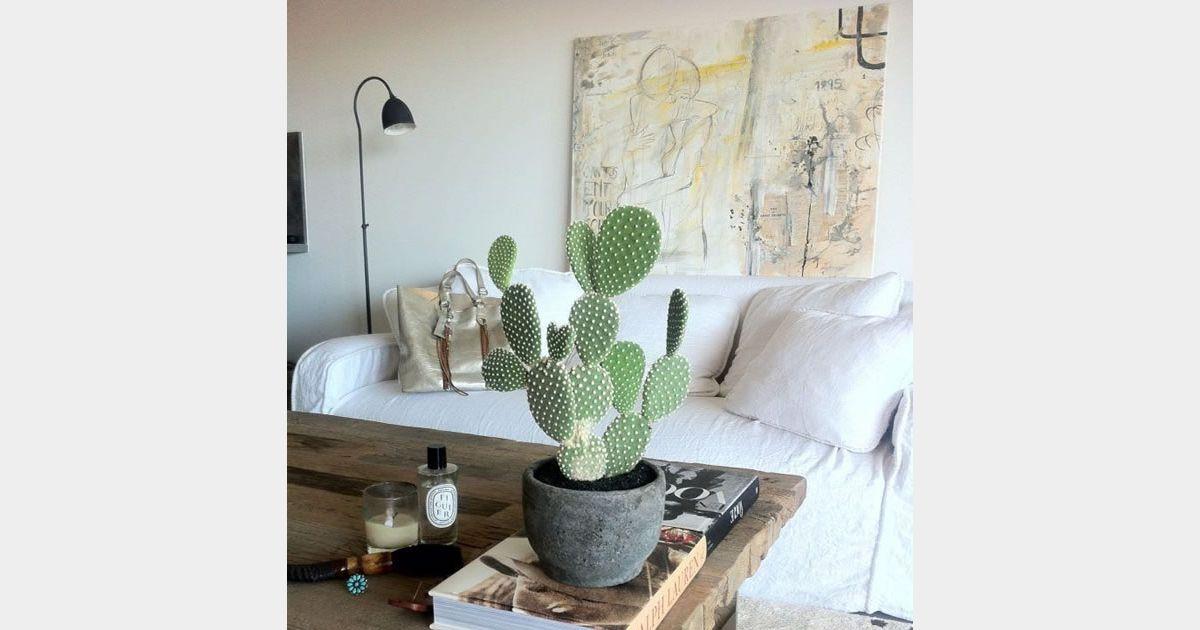 Id e d co n 15 un cactus sur la table du salon terrafemina for Idee de job