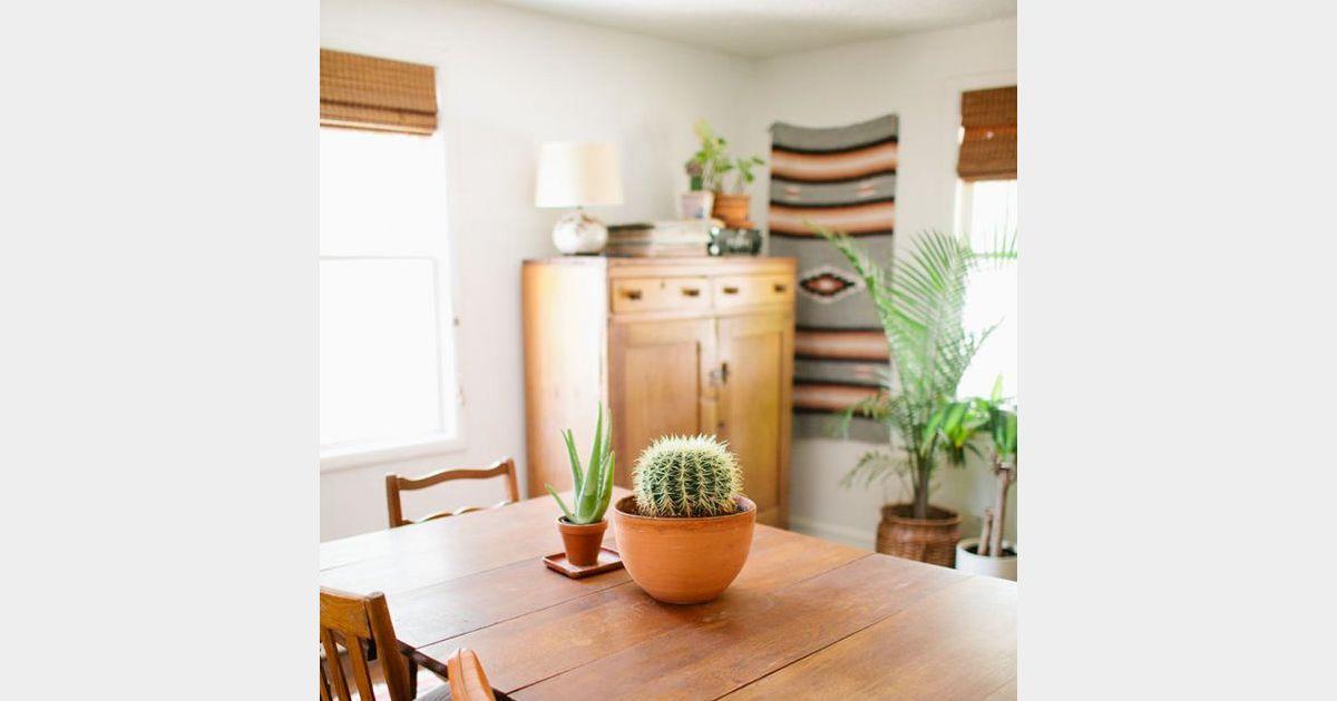 Id e d co n 19 des cactus sur la table de la salle for Idee de job