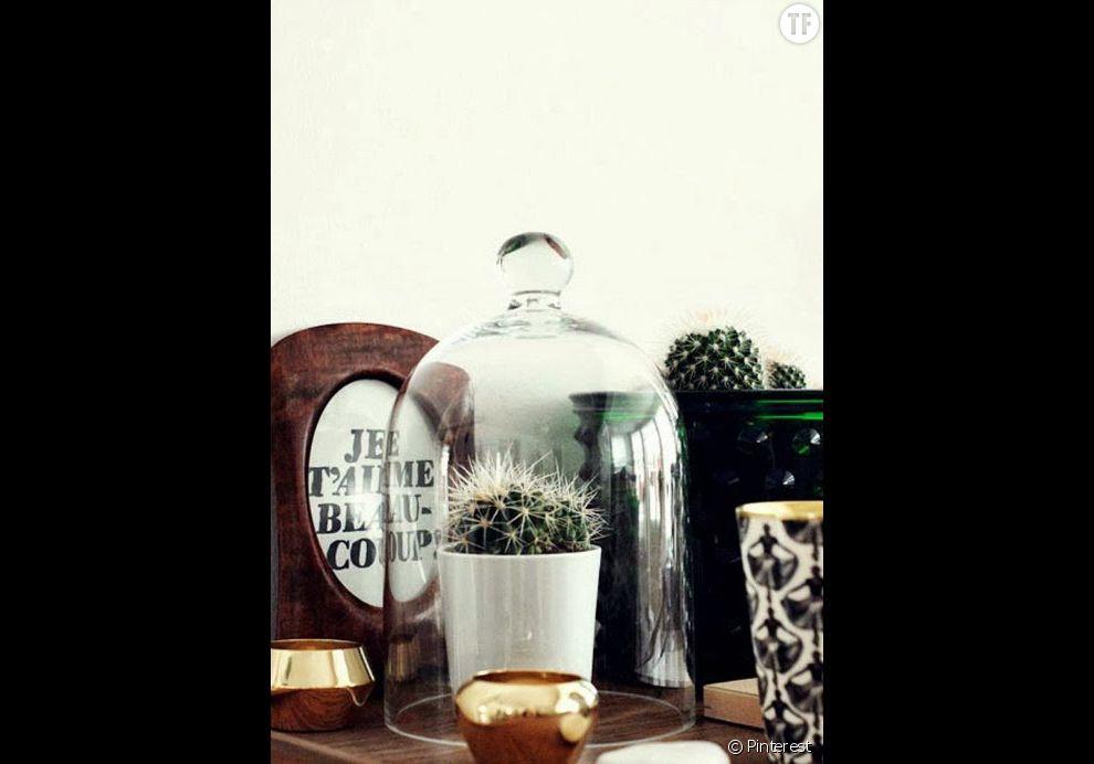 Idée déco n°20 : un cactus sous une cloche en verre