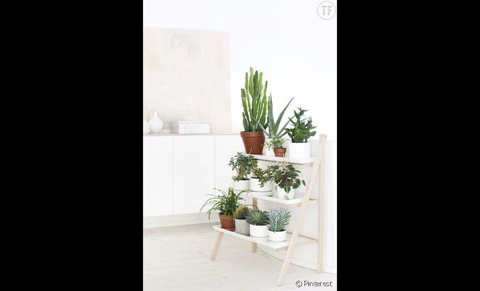 Idée déco n°21 : des cactus dans un intérieur épuré