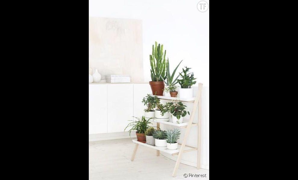 id e d co n 21 des cactus dans un int rieur pur terrafemina. Black Bedroom Furniture Sets. Home Design Ideas