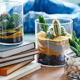 Idée déco n°22 : des cactus dans des terrarriums avec sable