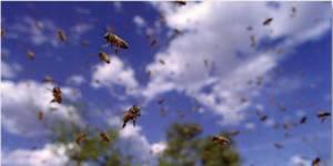 Pollen : Disney reverse une partie des recettes de son dernier film
