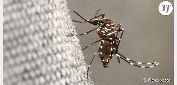 Le moustique-tigre est de retour : que faire pour éviter sa prolifération ?