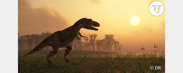 Dahalokely tokana : une nouvelle espèce de dinosaure à Madagascar