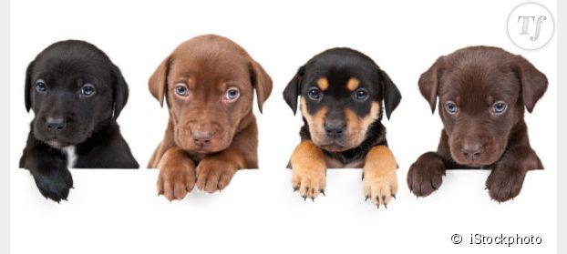 Avoir un chien est bon pour la santé de toute la famille
